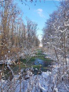 Winterwald an der Peene bei Menzlin (c) FRank Koebsch (2)