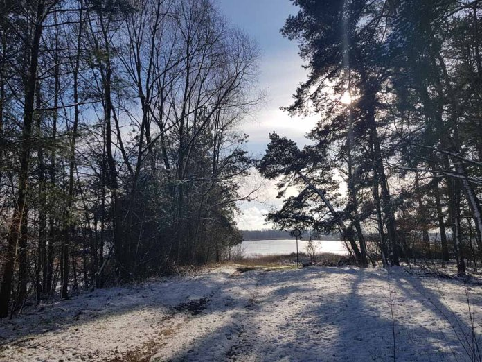 Winterwald an der Peene bei Menzlin (c) FRank Koebsch (3)