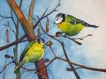 Blaumeisen genießen die erste Frühlingssonne (c) Aquarell von Frank Koebsch