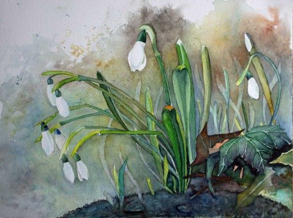 Endlich Frühling (c) ein Schneeglöckchen Aquarell von Frank Koebsch