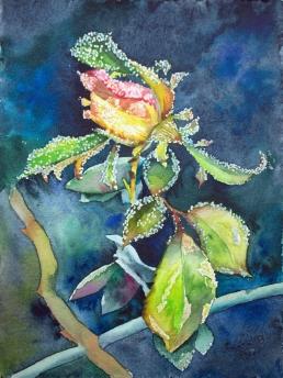 Frostige Schönheit (c) ein Rosen Aquarell von Frank Koebsch