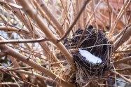 Vogelnest aus dem vergangenen Jahr warten auf den Frühling (c) Frank Koebsch