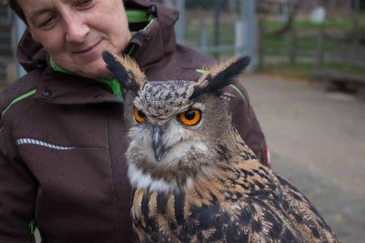 Tierpflegerin Liane Kasch mit einem Uhu des Wildparks MV (c) FRank Koebsch (3)