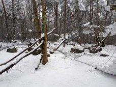 Wildpark-MV - eingestürzte kleine Seeadler-Voliere (1)