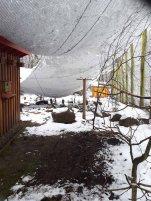Wildpark-MV - eingestürzte Sittich-Voliere (1)