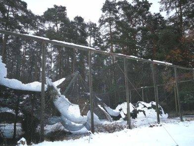 Wildpark -MV - eingestürzte Steinadler-Voliere (1)