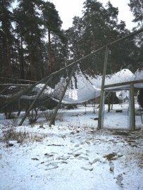 Wildpark-MV - eingestürzte Steinadler-Voliere (1)