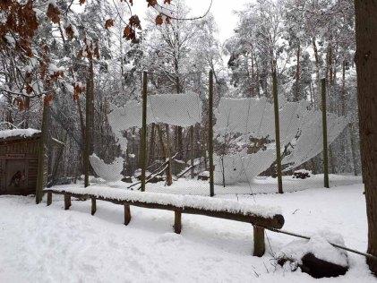 Wildpark -MV - eingestürzte Steinadler-Voliere (2)