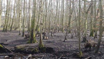 Wildschweine im Wildpark MV (c) FRank KOebsch (2)