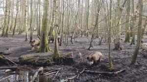 Wildschweine im Wildpark MV (c) FRank KOebsch (8)