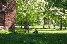 Pein Air Festival 2018 - Die Obstblüte im Klostergarten Bad Doberan ist ein wunderbares Motiv (c) FRank Koebsch (2)