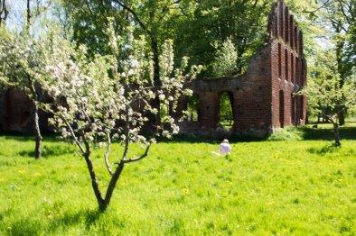 Pein Air Festival 2018 - Die Obstblüte im Klostergarten Bad Doberan ist ein wunderbares Motiv (c) FRank Koebsch (6)