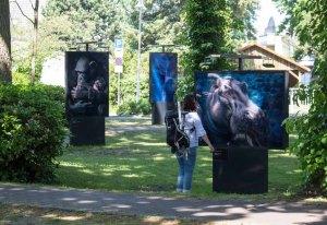 Die Ausstellung von Tim Flach – In Gefahr – bedrohte Tiere im Porträt - im Rahmen des Umweltfotofestival - horizonte zingst am Postplatz (c) FRank Koebsch (2)