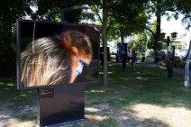 Die Ausstellung von Tim Flach – In Gefahr – bedrohte Tiere im Porträt - im Rahmen des Umweltfotofestival - horizonte zingst am Postplatz (c) FRank Koebsch (4)