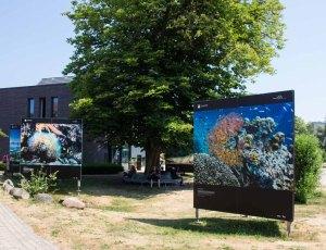 Die Ausstellung von York Hovest – Helden der Meere - im Rahmen des Umweltfotofestival - horizonte zingst am Max Hüntenhaus (c) FRank Koebsch (1)