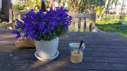 Schnappschüsse ais dem Garten der Alten Büdnerei (c) FRank Koebsch (4)