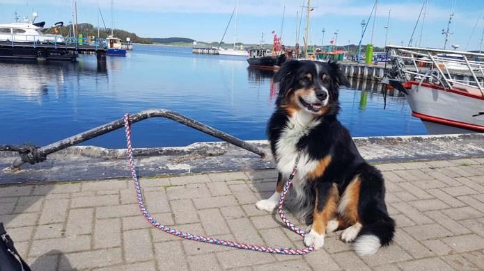 Kein Seehund sondern Ebby begelitet uns als Malhund (c) Frank Koebsch