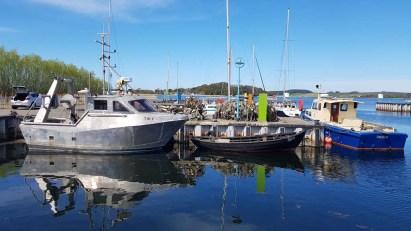 Kutter und Fischerboote im Hafen von Thiessow (c) Frank Koebsch (2)