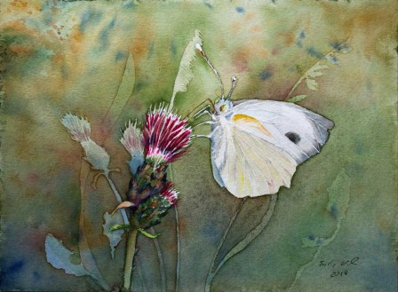 Schmetterling auf einer Distelblüte (c) Aquarell von Frank Koebsch
