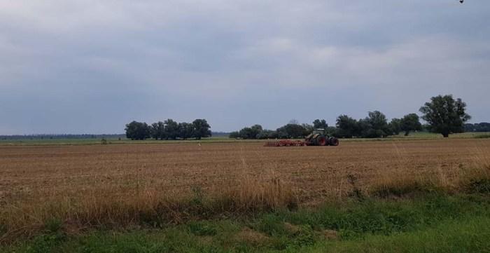 Störche und Traktoren auf den Feldern von Bugewitz in der Nähe des Anklamer Stadtbruchs (c) Frank Koebsch
