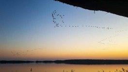 Anflug der Kraniche auf den Rederand See bei Sonnenunergang (c) FRank Koebsch (1)
