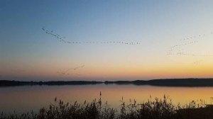 Anflug der Kraniche auf den Rederand See bei Sonnenunergang (c) FRank Koebsch (2)