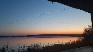Anflug der Kraniche auf den Rederand See bei Sonnenunergang (c) FRank Koebsch (4)