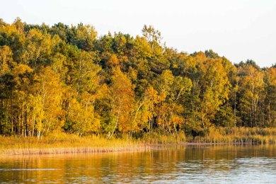 Herbst am Rederangsee (c) Frank Koebsch (1)