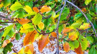 Herbstfarben am Südstrand von Sellin © Frank Koebsch (1)