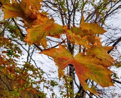 Herbstfarben am Südstrand von Sellin © Frank Koebsch (2)