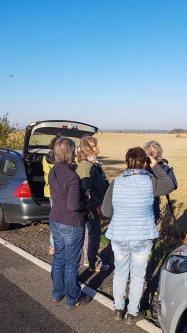 Kranichbeobachtungen auf den Feldern an der Müritz (c) FRank Koebsch (1)