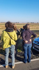 Kranichbeobachtungen auf den Feldern an der Müritz (c) FRank Koebsch (2)