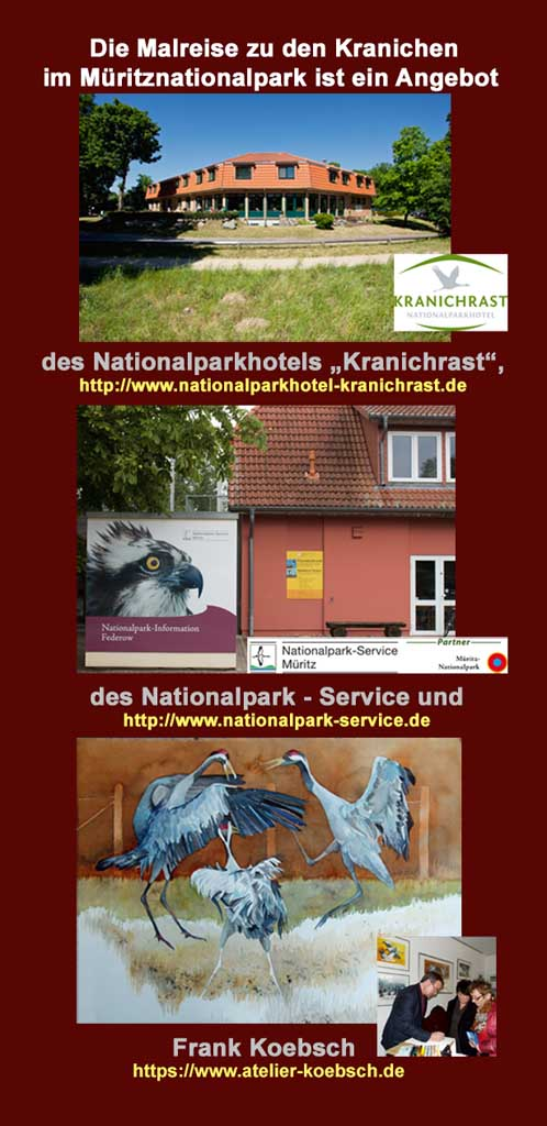 Malreise zu den Kranichen im Müritz Nationalpark RS 2019