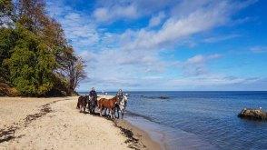 Pferde am Südstrand von Sellin © Frank Koebsch (2)
