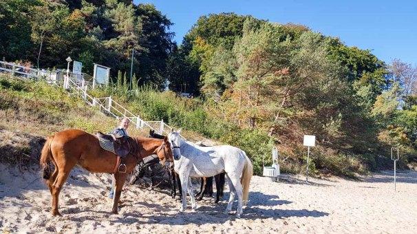 Pferde am Südstrand von Sellin © Frank Koebsch (4)