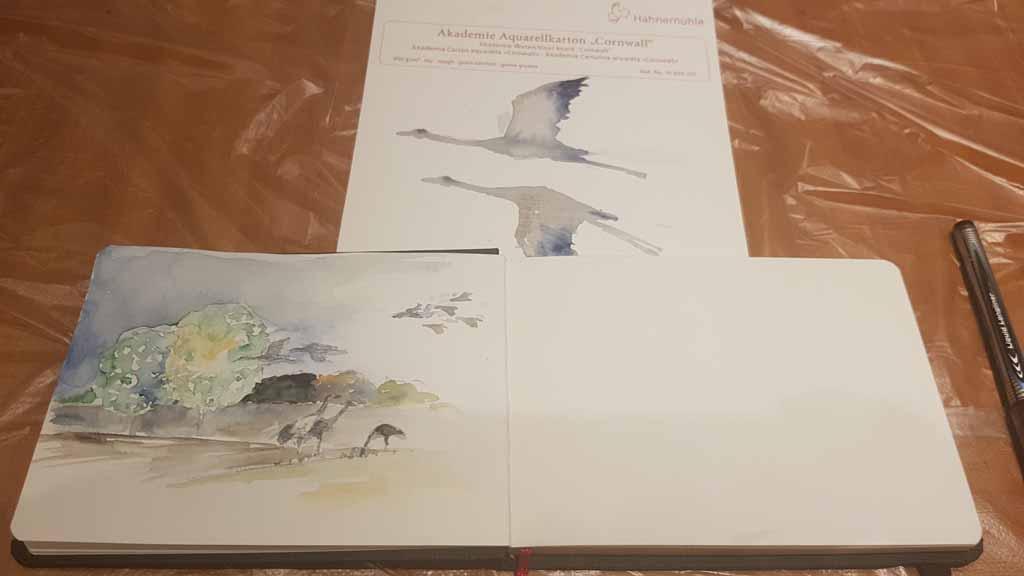 Skizzen für die Kranich Aquarelle (c) FRank Koebsch (1)