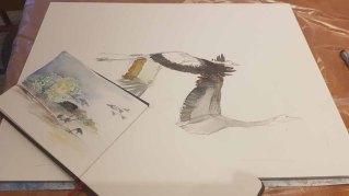 Skizzen für die Kranich Aquarelle (c) FRank Koebsch (2)