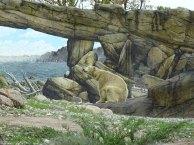 Eisbär Akiak im Polarium des Rostocker Zoos (c) Hanka Koebsch (5)