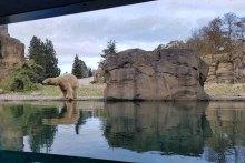 Eisbären im Polarium des Rostocker Zoos (c) Frank Koebsch (1)