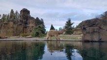 Eisbären im Polarium des Rostocker Zoos (c) Frank Koebsch (2)