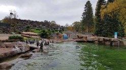 PInguine im neuen Gehege des Rostocker Zoos (c) FRank Koebsch (2)