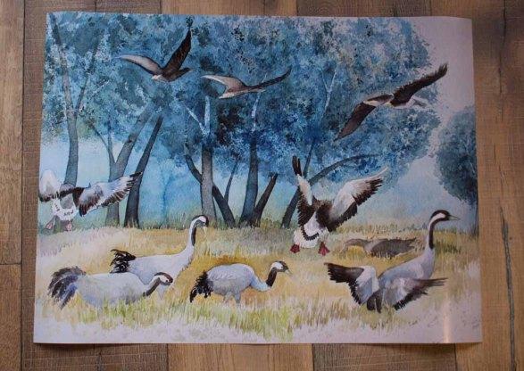 Posterdruck vom Kranich Aquarell - Der Tisch ist gedeckt (c) Frank Koebsch