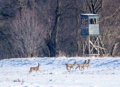 Winterliche Weihnachtsbilder.Rehe Im Winterwald Ein Neues Wild Life Aquarell Bilder