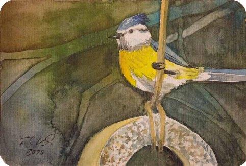 Blaumeise am Futterring (c) eine Miniatur in Aquarell von Frank Koebsch