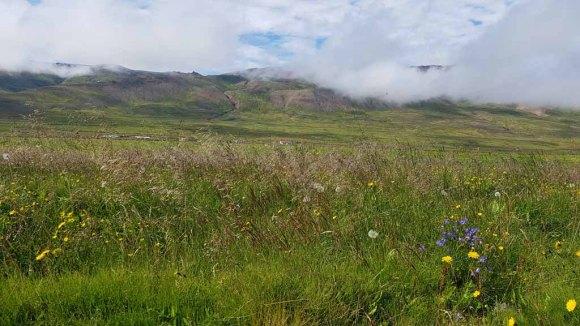 Isländische Natur in Bakkagerði (c) Frank Koebsch (2)