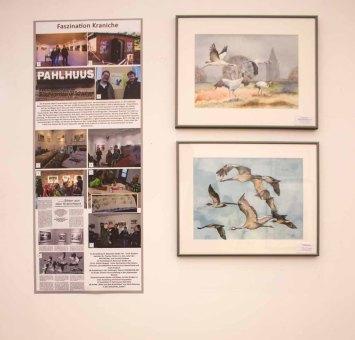 Aquarelle aus dem Projekt Faszination Kraniche von Frank Koebsch in der Kunsthalle Kühlungsborn.