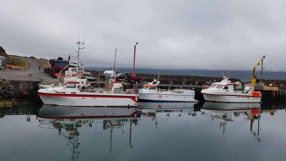 Hafen von Bakkagerði - Island (c) Frank Koebsch (1)