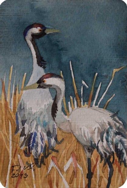 Kraniche auf den Wiesen (c) Miniatur in Aquarell von Frank Koebsch