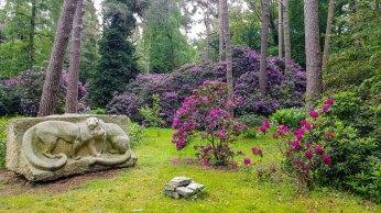 Rhododendren Blüte im Rostock Zoo (c) FRank Koebsch (2)