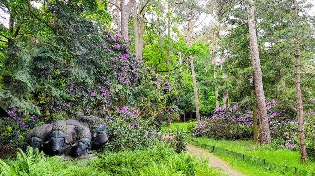 Rhododendren Blüte im Rostock Zoo (c) FRank Koebsch (5)